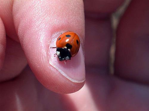 Очень маленькие на пальце: Рис.9