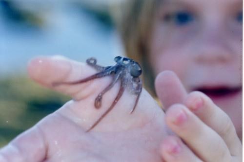 Очень маленькие на пальце: Рис.11