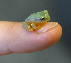 Очень маленькие на пальце: Рис.17