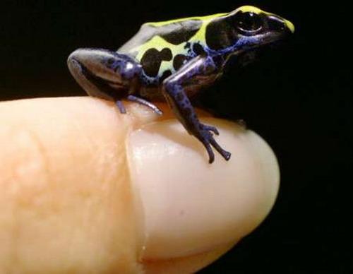 Очень маленькие на пальце: Рис.19