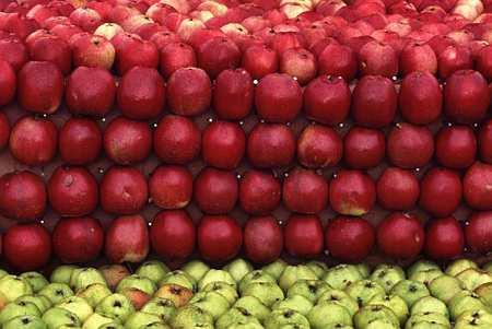 Яблочные картины: Рис.1