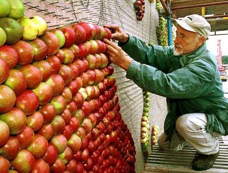 Яблочные картины: Рис.3