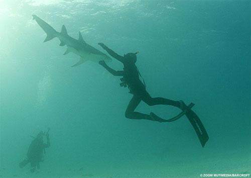 Акулы как хобби: Рис.6