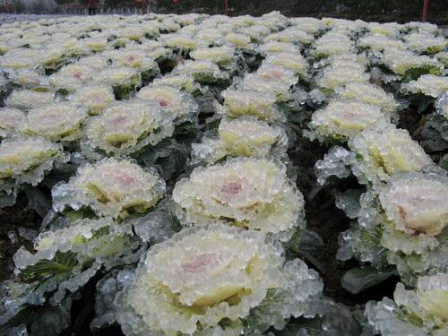 Замерзший дождь: Рис.5
