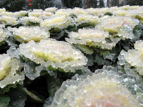 Замерзший дождь: Рис.6