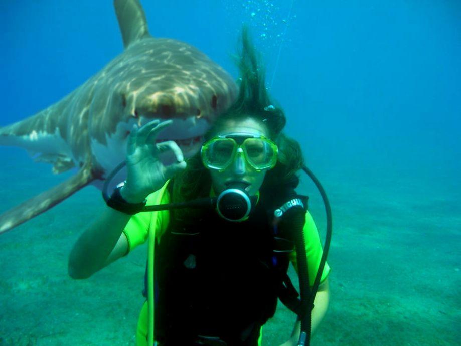 Акулы в девять раз чаще нападают на мужчин, чем на женщин
