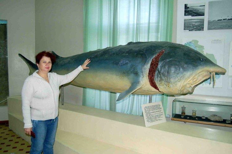 Размер рыбы белуги